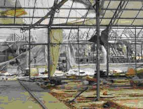 GREENHOUSE DESTROYED